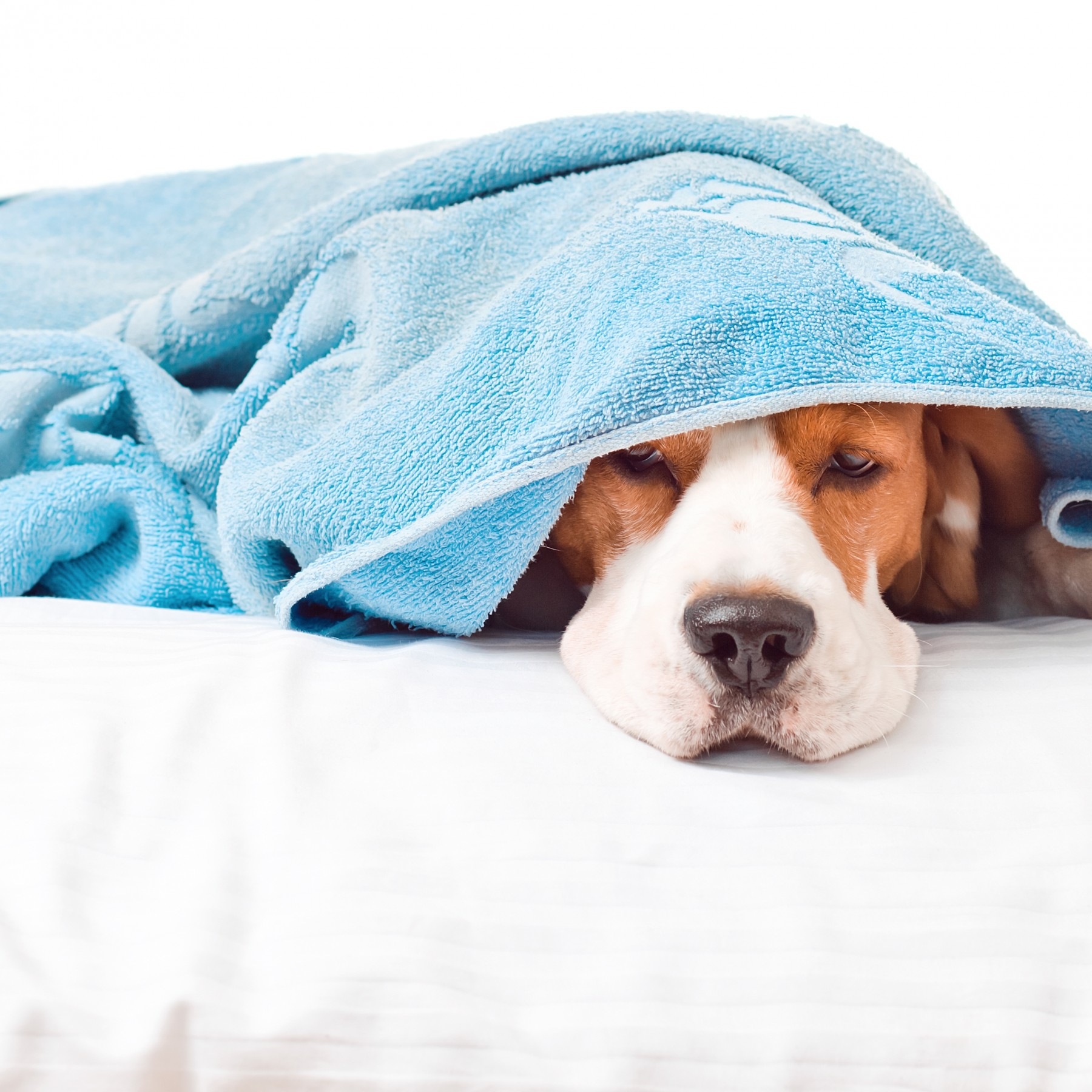 10 Dogs Who Are Ready for Bedtime