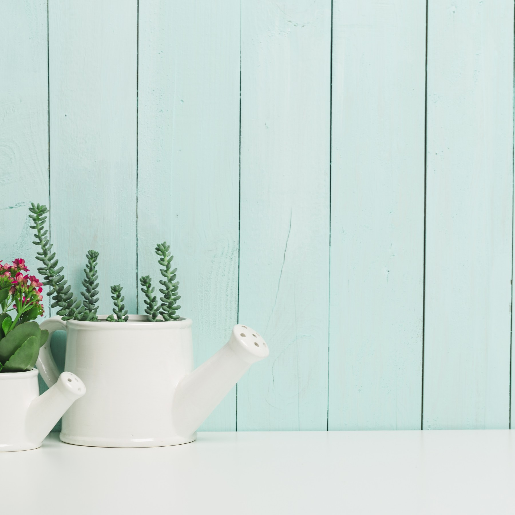 The Benefits of Having Plants in your Home